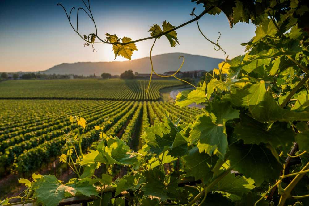 фестиваль вина италия рим марино национальные праздники лацио праздник вина фонтаны вино театрализованные шествия