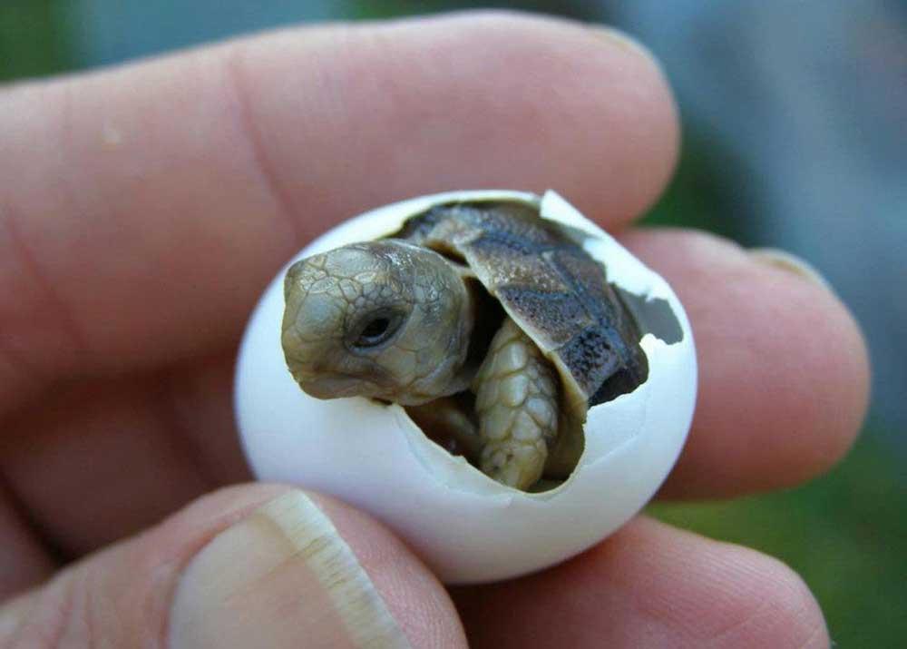 Рождение черепахи